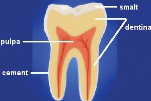 alcatuirea dintelui